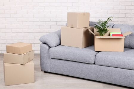 Cardboard boxes with green plant and books on grey sofa