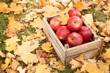 Wooden crate with red apples in autumn park