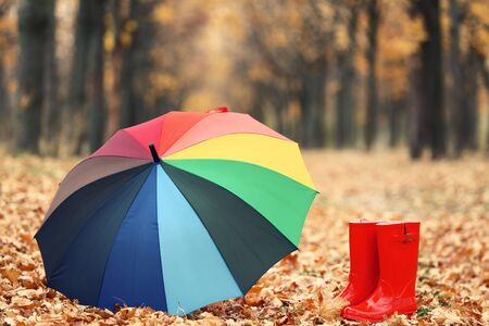 Colorful umbrella with red rubber boots and dry leafs in autumn park