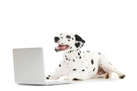 Dalmatian dog with laptop computer on white background
