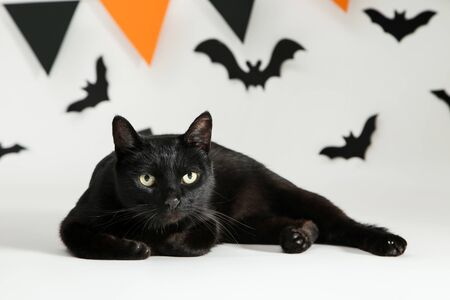 Black cat with paper bats and flags on white background