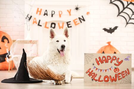 Swiss shepherd dog with hat, broom and text Happy Halloween