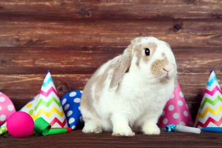 Beautiful rabbit with birthday caps and blowers on brown wooden table Standard-Bild