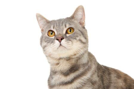 Beautiful cat isolated on white background Stock Photo