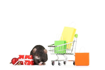 Black rat with shopping cart, bags and gift box on white background 版權商用圖片