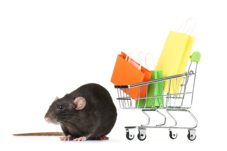 Black rat and shopping cart with bags isolated on white background