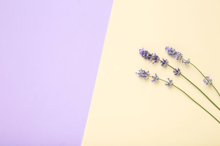 Lavender flowers on colorful background