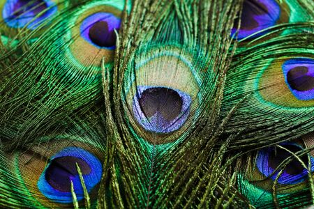 Background of beautiful peacock feathers Stockfoto