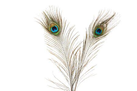 Pfauenfedern isoliert auf weißem Hintergrund Standard-Bild