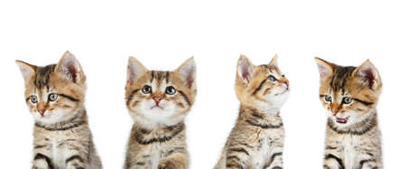 Collage of cute kitten on white background