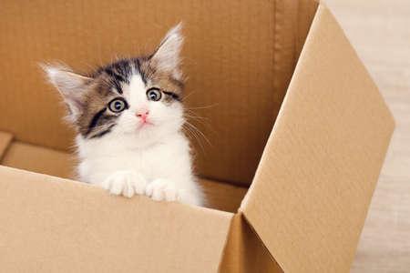 Cute kitten in brown cardboard box Фото со стока