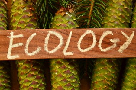 word ecology Standard-Bild