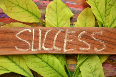 word success Standard-Bild