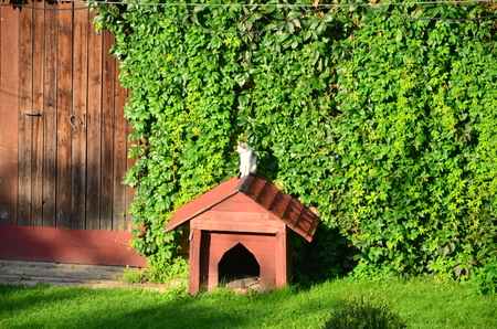 A cat sitting on the roof of a dog house Stock Photo