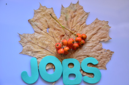 word jobs on a dry maple leaves with seeds on grey background