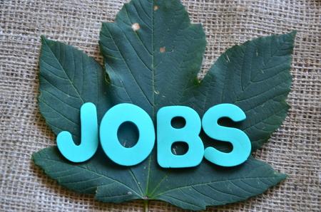 word jobs on a green leaf background Stok Fotoğraf