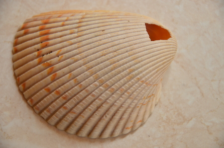 white shell at the beach background. Imagens