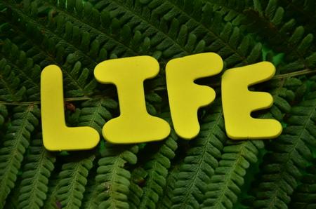 word life 版權商用圖片 - 117080982