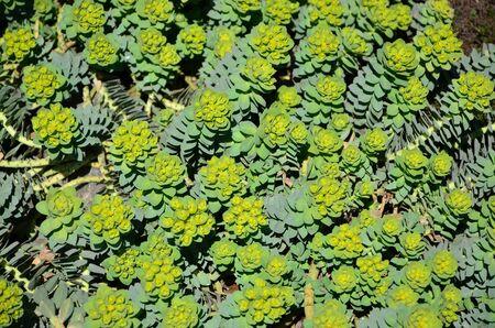 GREEN PLANTS Banque d'images