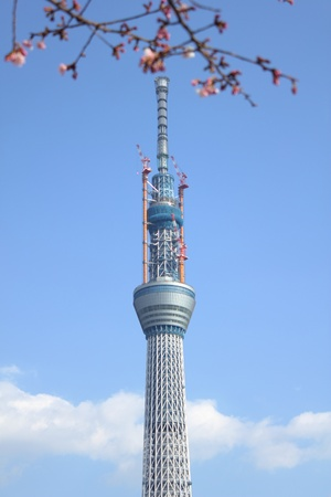 Tokyo Sky Tree and flowering of cherry blossoms