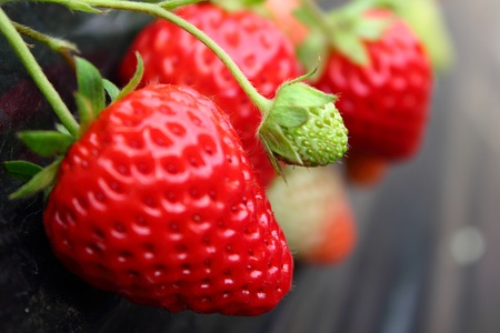 strawberry plant: Strawberry, BENI-HOPPE