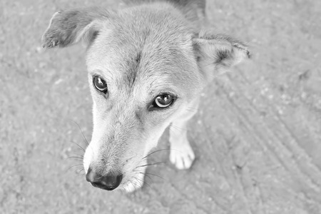 Close up in the eyes ,Street Dogs pleaded with poor eyesight