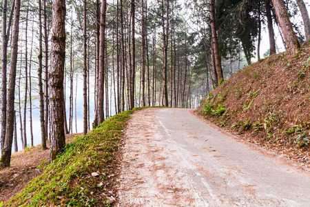 pine trees: Way on a hill surrounded by pine trees with fog at Mae Hong Son - Pang Ung Stock Photo
