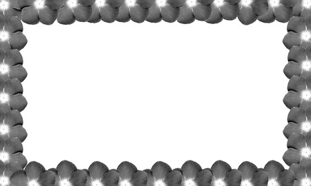 monotone: monotone border from flowers on white background Stock Photo