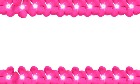 natural background: border design from pink flowers