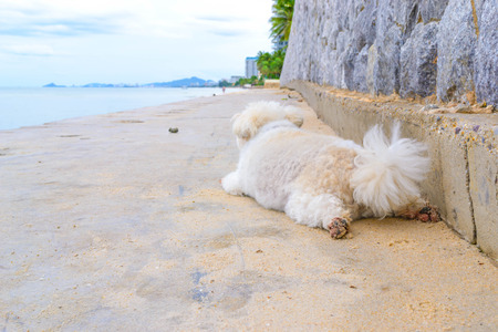 ridge of wave: rear view of a white dog alone on a cement floor looking out to sea under a blue sky