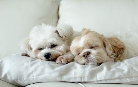 Different dog breeds. best friends