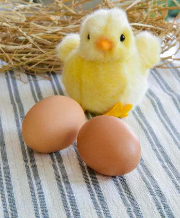 fresh egg photo