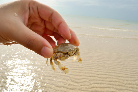 Stroll the beach during summer and catch a sea crab photo