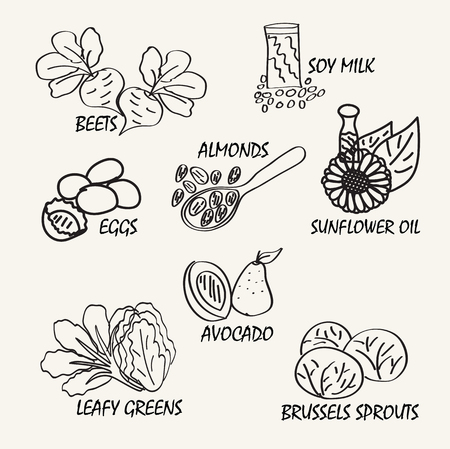 soy: Line drawing natural food. Vector hand drawing food elements for education.