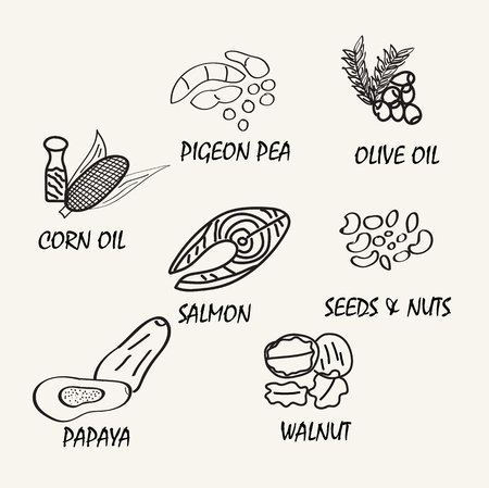 healtcare: Line drawing natural food. Vector hand drawing food elements for education.
