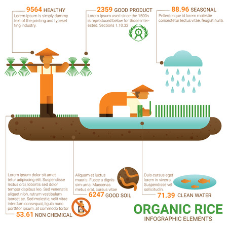 cultivation: Healthy food organic rice infographic flat design.  Knowledge healthy food concept. Cultivation. Agriculture. Organic farming. Biological farming. Ecological farming. Good food good health. World food. Illustration