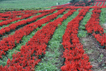 gules: Chongqing ecological agriculture landscape