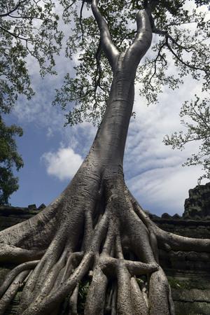 Angkor Thapung Temple Imagens - 110609421