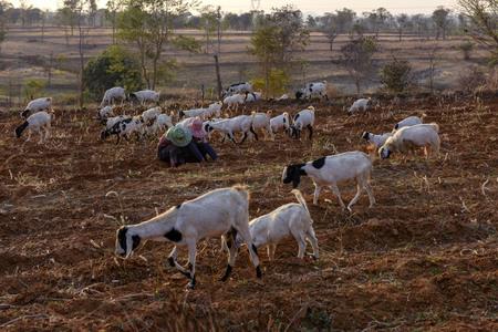 Mandalay pastoral scenery Фото со стока