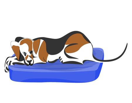 Hunter dog lying lazy on blue mattress vector color cartoon image.