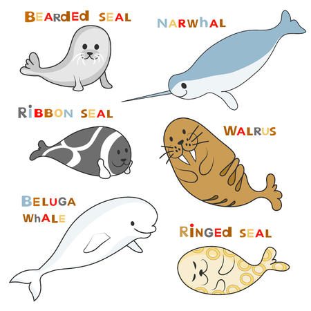 Arctic marine mammals set (beluga whale, narwhal, ringed seal, ribbon seal, bearded seal, walrus). Vector cartoon color image with text names.