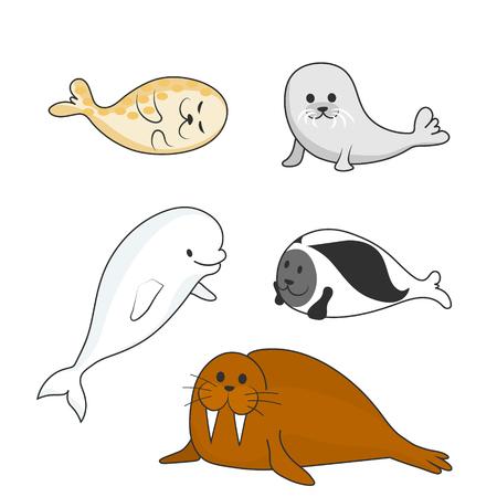 Arctic marine mammals set (beluga whale, ringed seal, harp seal, bearded seal, walrus). Vector cartoon color image.