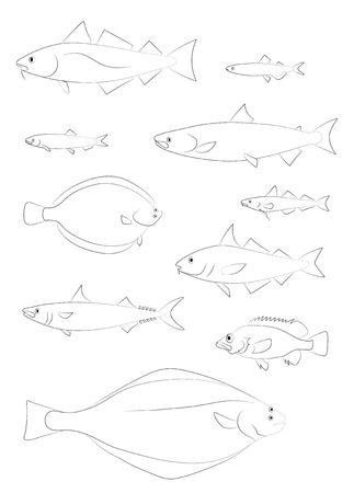 Sagome di pesce del Nord Atlantico (merluzzo, halibut, eglefino, salmone, scorfano, sgombro, aringa). Set di immagini di disegno vettoriale.