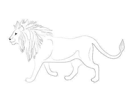 Lion with mane. Hand drawing black and white outline vector image.