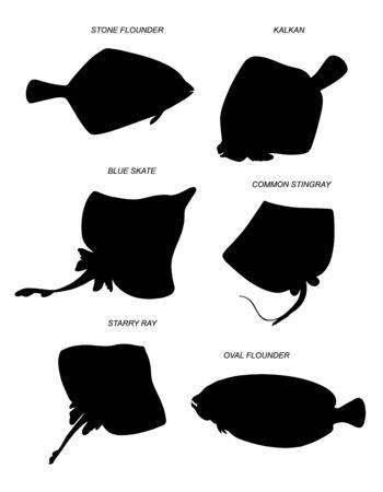 Poissons plats et raies. Jeu de silhouettes de dessin vectoriel.