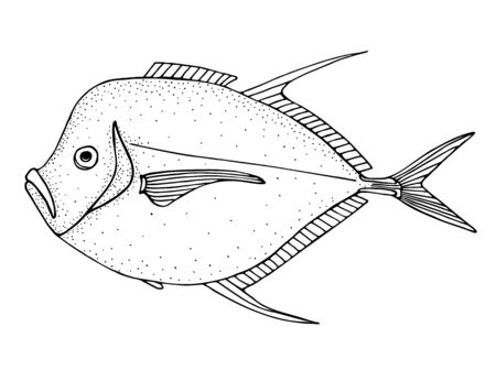 Moonfish. Black hand drawn realistic outline vector image.