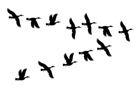 Ducks. Flock of birds flying. Vector black image silhouette.
