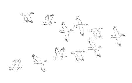 Ducks. Flock of birds flying. Vector outline image silhouette.