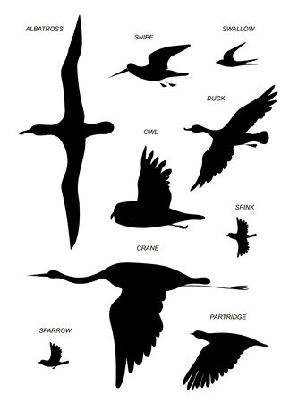 Flying birds with text names (crane, gull, Albatross, duck, Sparrow, Sandpiper, partridge, owl, swallow ). Vector image silhouettes.