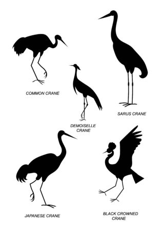 Five different types of cranes. Vector silhouette image collection.